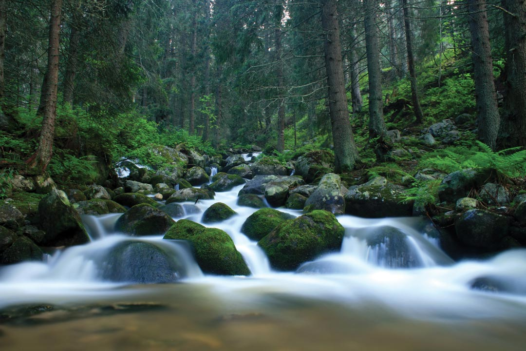 a river flowing through a fresh pine forest