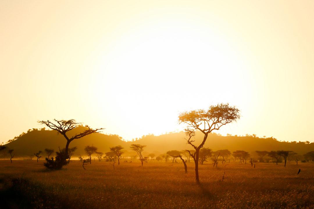 the sun rising on a savannah