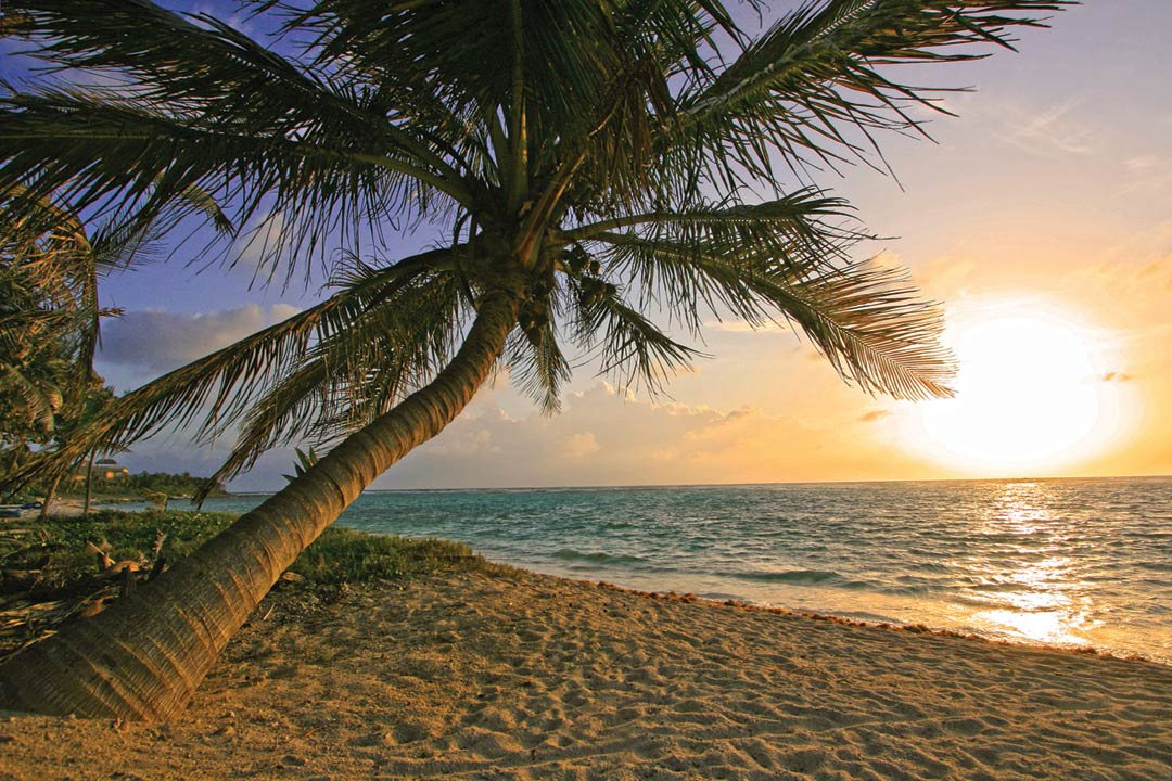 A huge palm tree on beach of white sand, with a setting sun and the clear blue ocean in the background