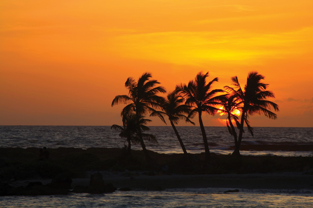 A row of palm trees are silhouetted against the sinking sun and a bright orange sky