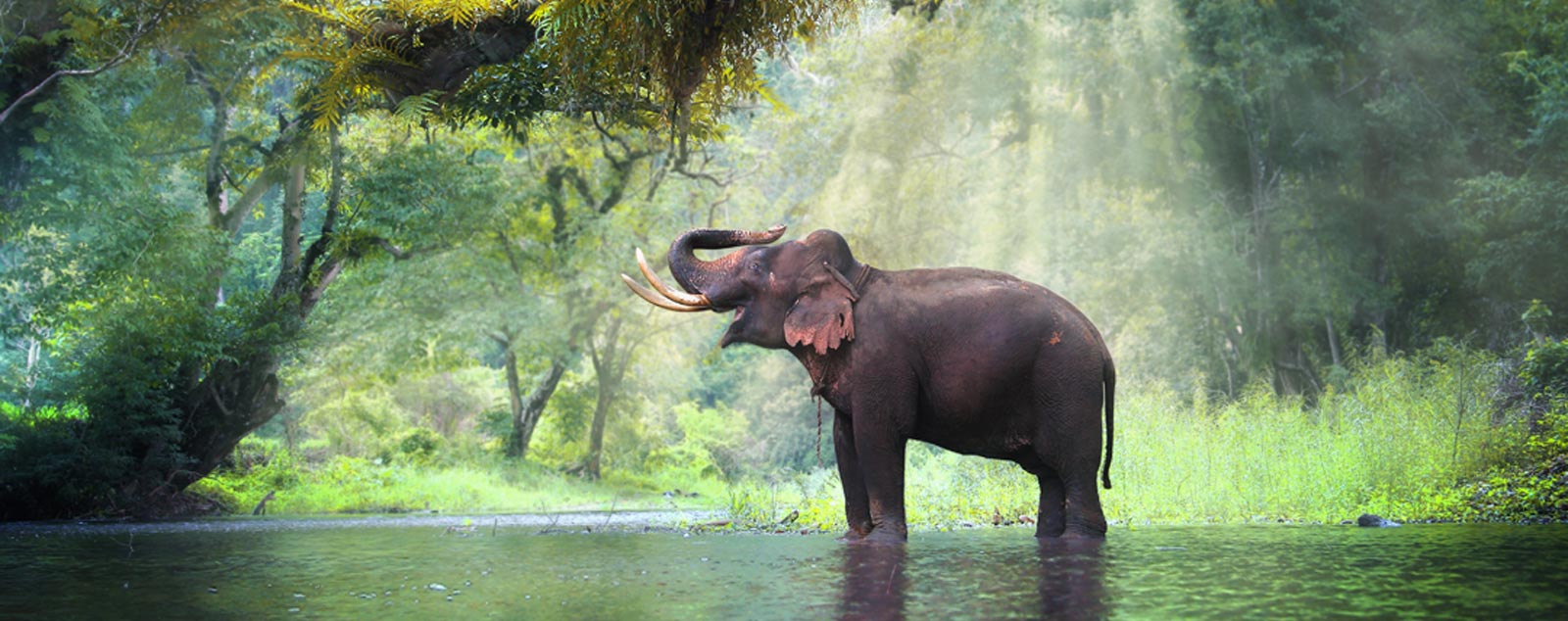 An elephant soaking herself in a river with sunlight pouring through the forest canopy