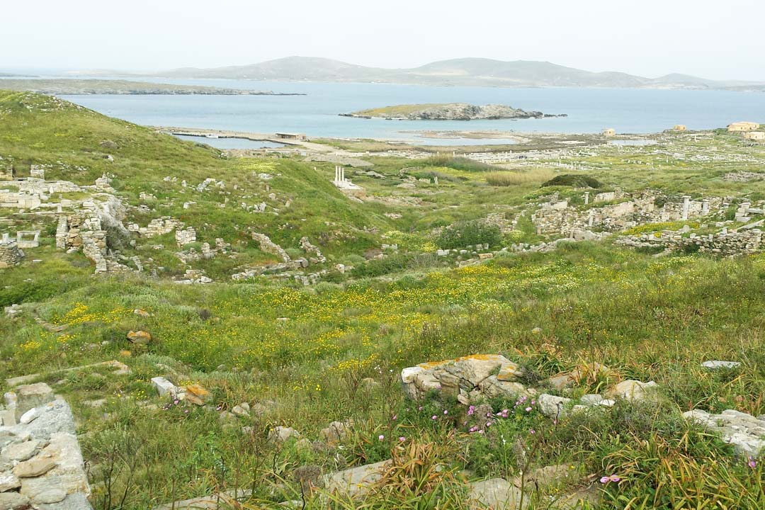 Fields of yellow flowers and greenery surrounding Delos marble ruins