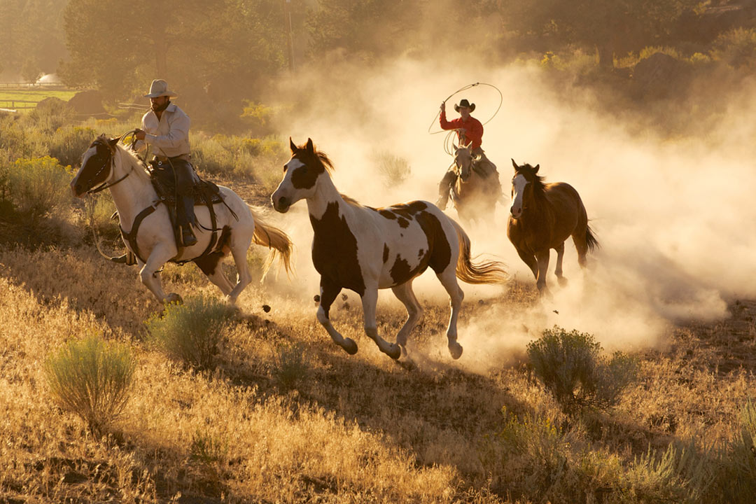 two cowboys riding behind 2 horses kicking up dust whilst spinning a rope in the air