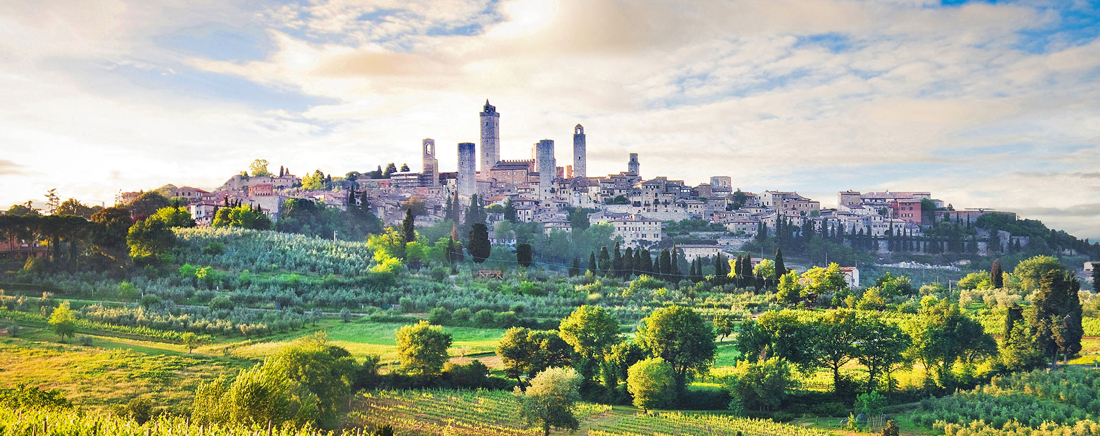 A Tuscan vineyard is in the foreground and is surrounded by luscious rolling countryside. In the background the towers of the medieval town of San Gimignano jut out into the blue sky.