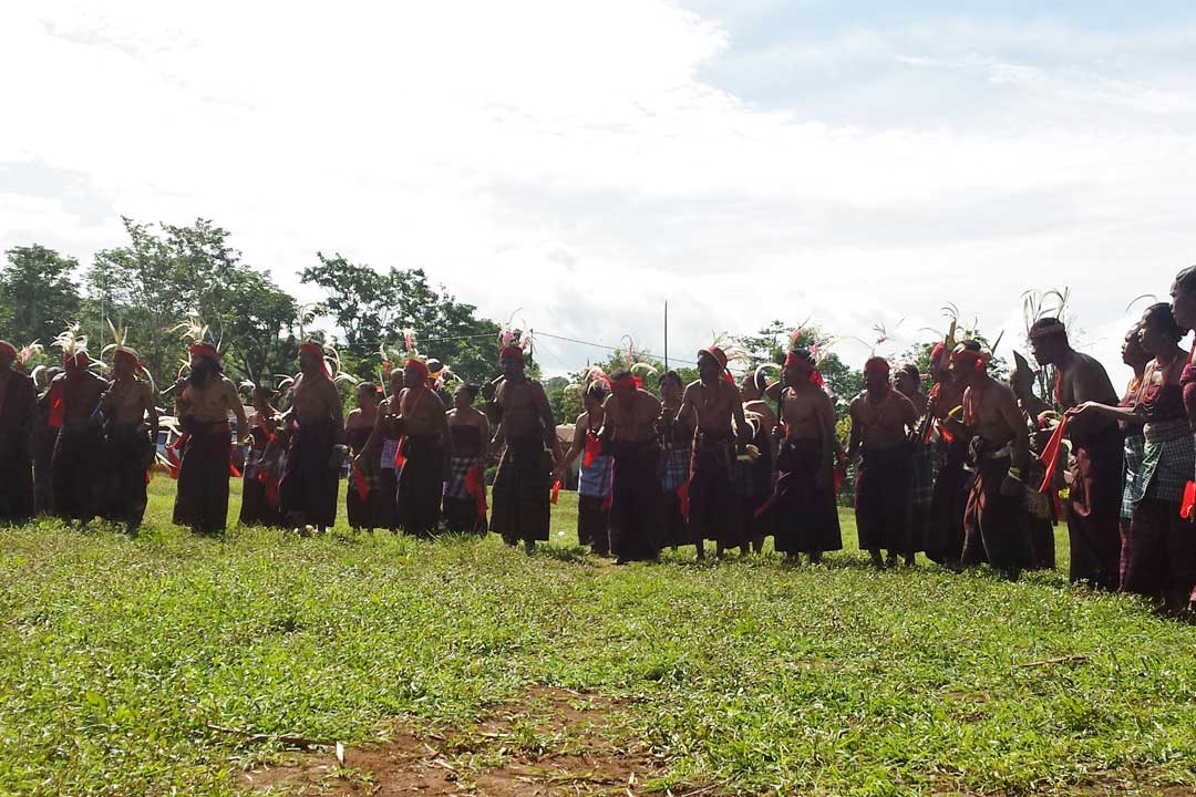 A traditional Indonesian tribal dance. The participants are wearing red and black sarongs. They are wearing large antler like feathers on their heads attached with red cloth. Men and women are in formation in two lines one behind another.