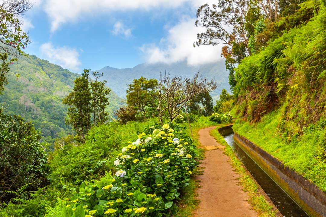 One of Madeira's levadas, a narrow water way surrounded by bright greenery and mountains