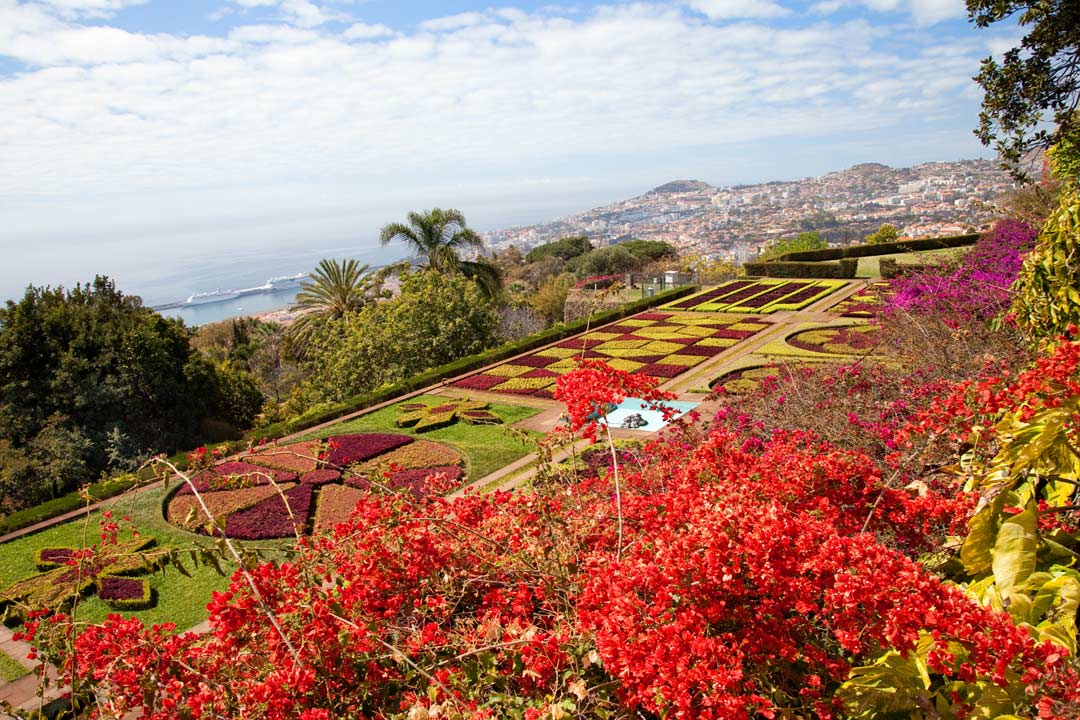 A vibrant green and red terraced gardens, with Funchal in the distance
