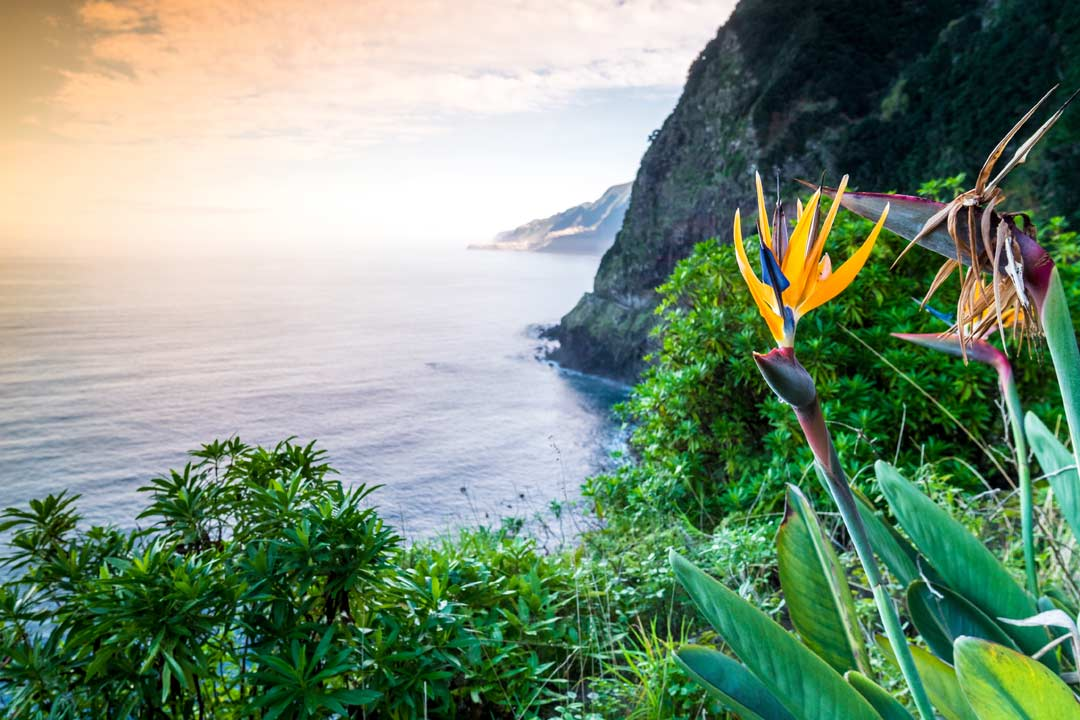 Bright coloured flora sits on a very steep cliffside
