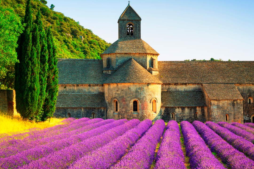 An old stone church with bright purple lavender plants in the foreground
