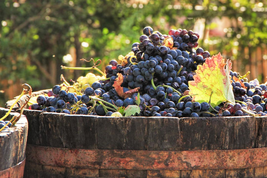 A wooden vat full of succulent red grapes
