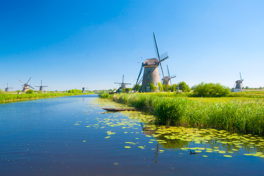 A river running through bright green wetlands is surrounded by numerous windmills