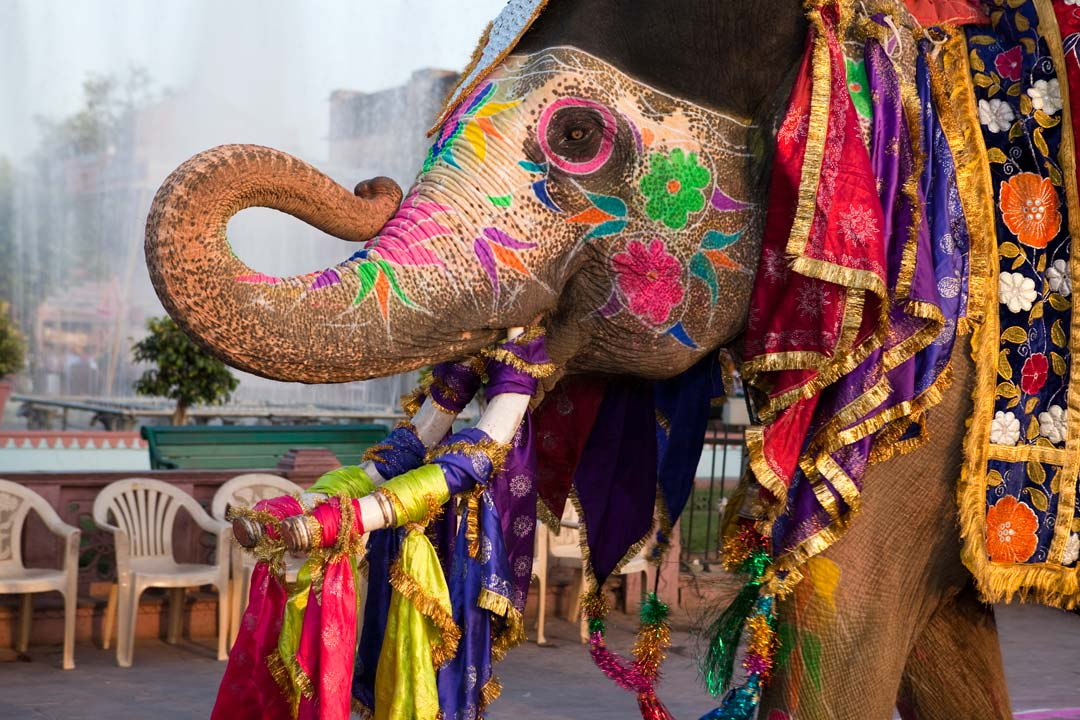 The face of an elephant that has been painted with colourful flowers and covered in ribbons