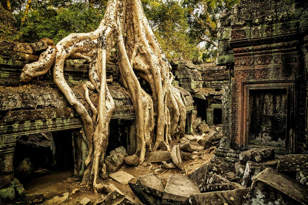 A temple cloister with a huge tree growing on the roof with tree trunks draping into the ground