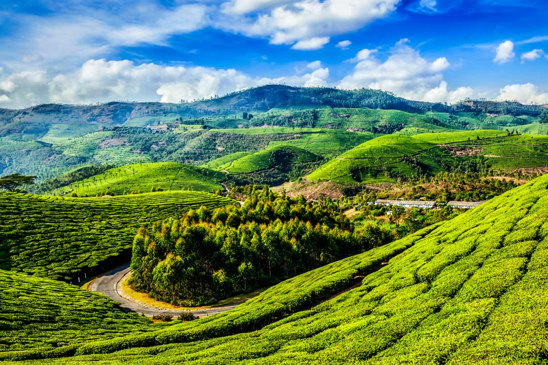 hills covered in tea plantations and a bright sky