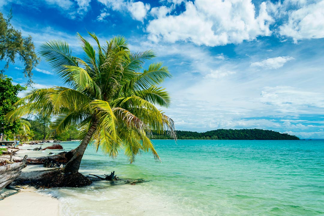 A low palm tree hovers over white sand and clear turqouise waters