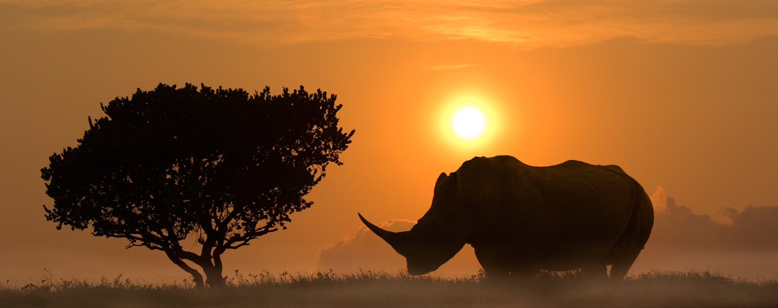 The shadowed silhouette of a rhino and typical savannah tree as the sun sets over the African bush
