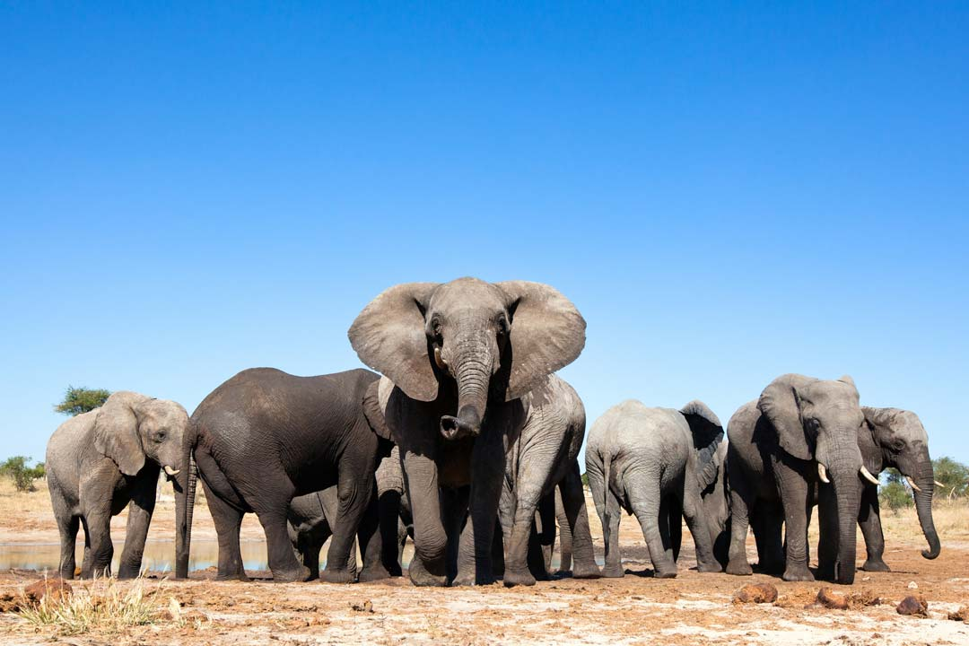 A herd of elephants surround a watering hole