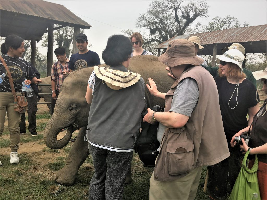 Our travellers are meeting a baby elephant, gently stroking its back as it feeds itself.