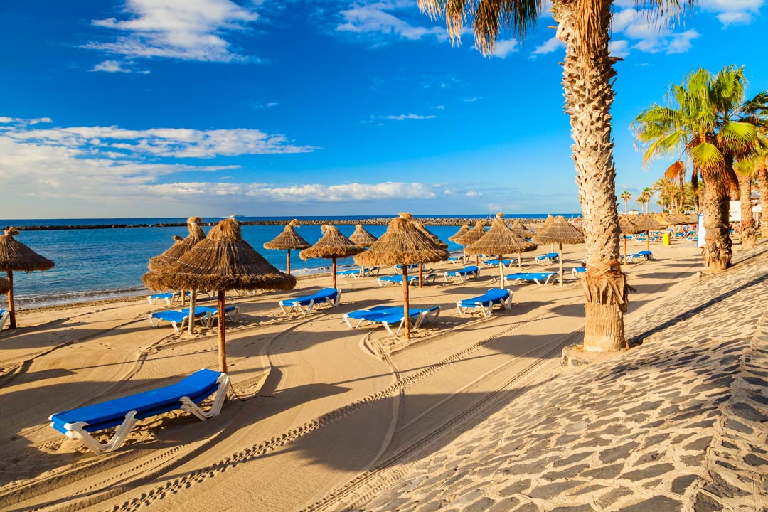 A groomed beach with blue sun loungers lied out next to the sea