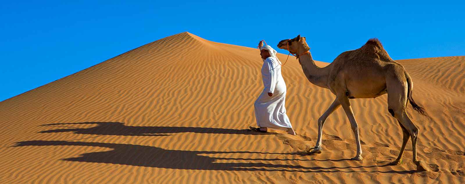An Arabian man in traditional white robes leads a camel through a yellow sandy desert
