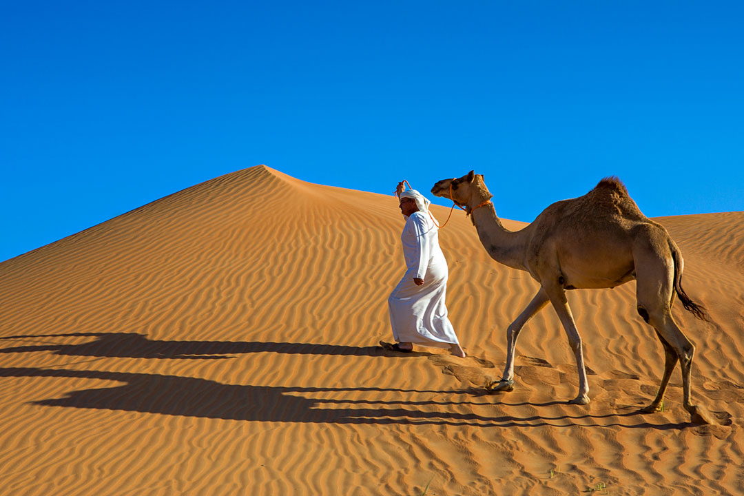 An Arabian Man dressed in traditional white robes leads a camel through the desert
