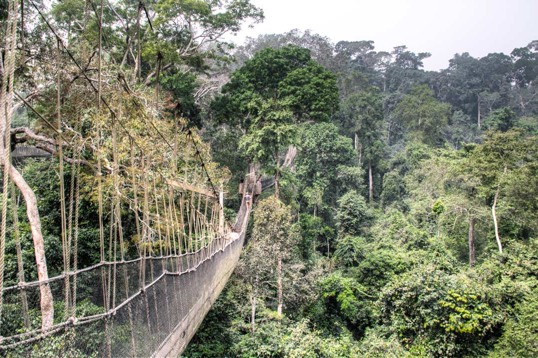 A bridge made of rope and wood leading across a large ravine through the tree canopy
