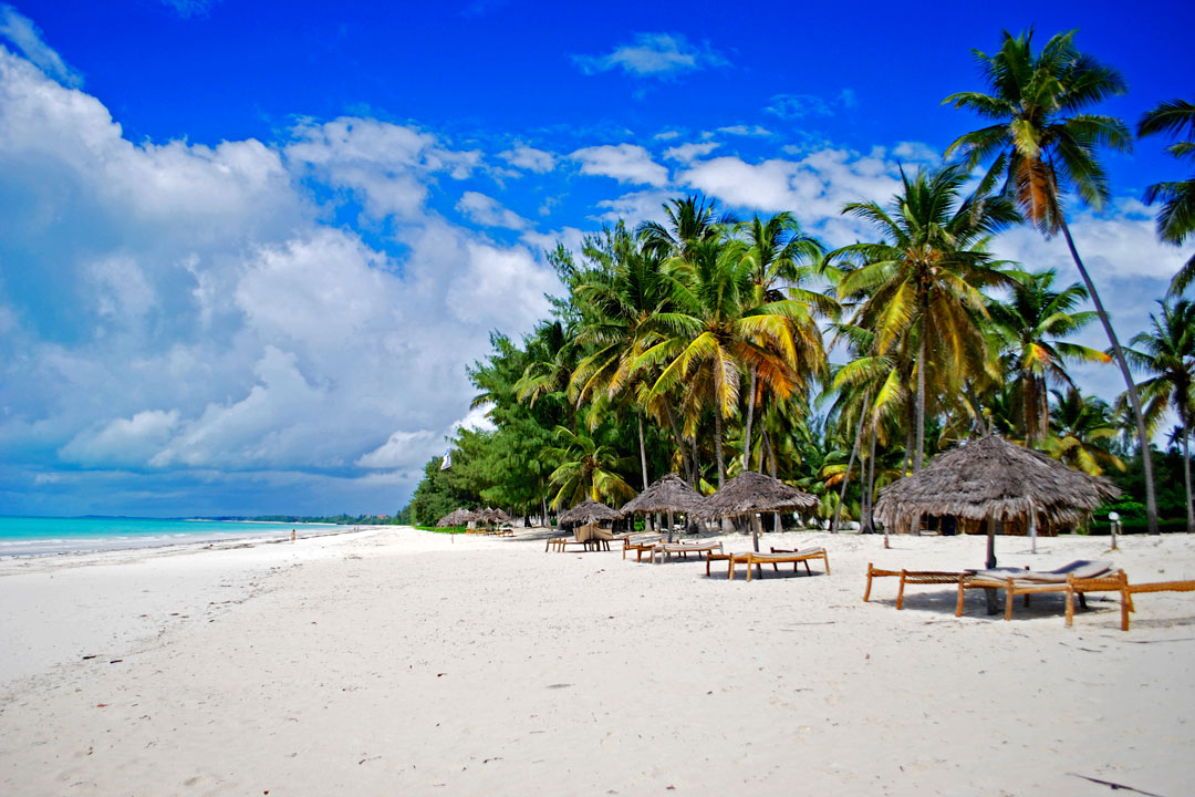 A white sandy beach lined by tall palm trees next to the blue sea