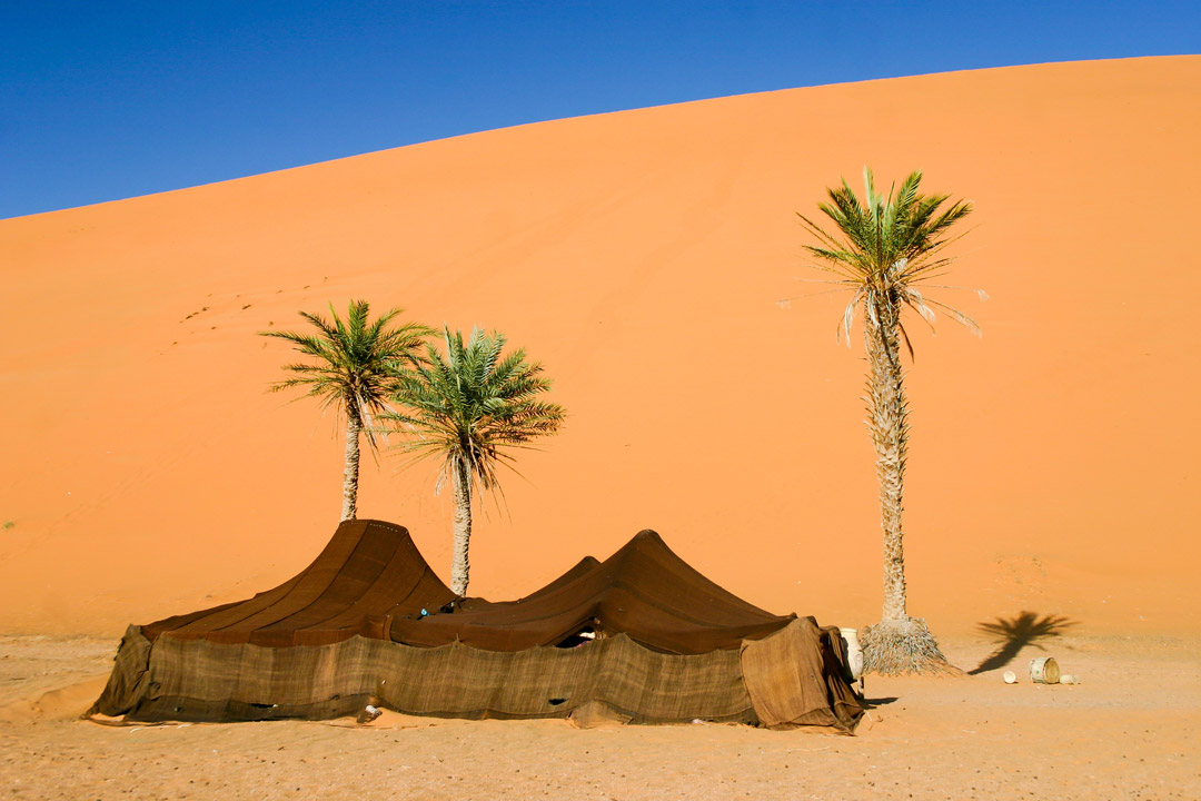 A traditional Bedouin brown tent next to three palm trees in the desert