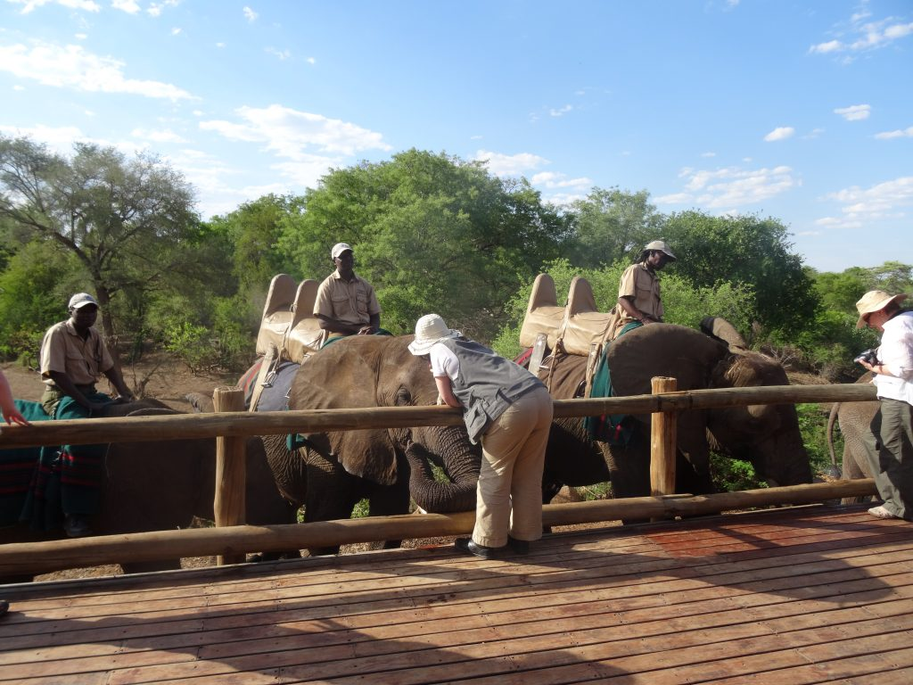 Liz stroking an elephant whilst on safari with Traveleyes