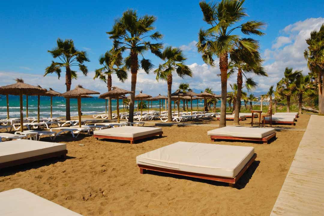 Luxurious large padded sunbeds on a golden sandy beach with palm trees dotted all over
