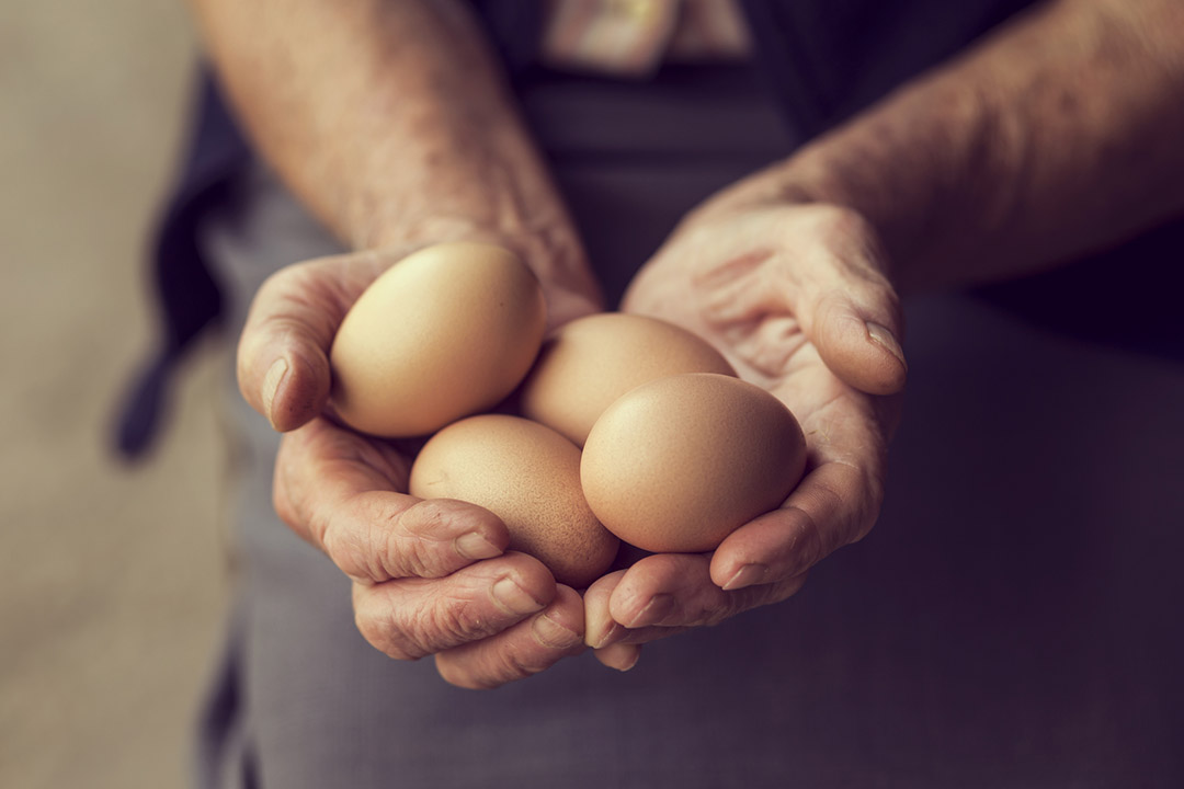 4 eggs being held by 2 hands