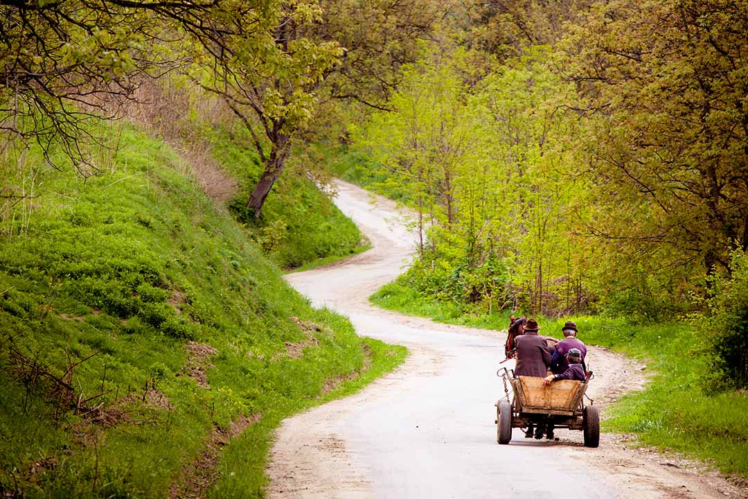 Horse and carriage through a narrow road with trees and greenery on either side